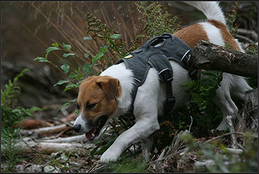 web-master-harness-forest-378.jpg